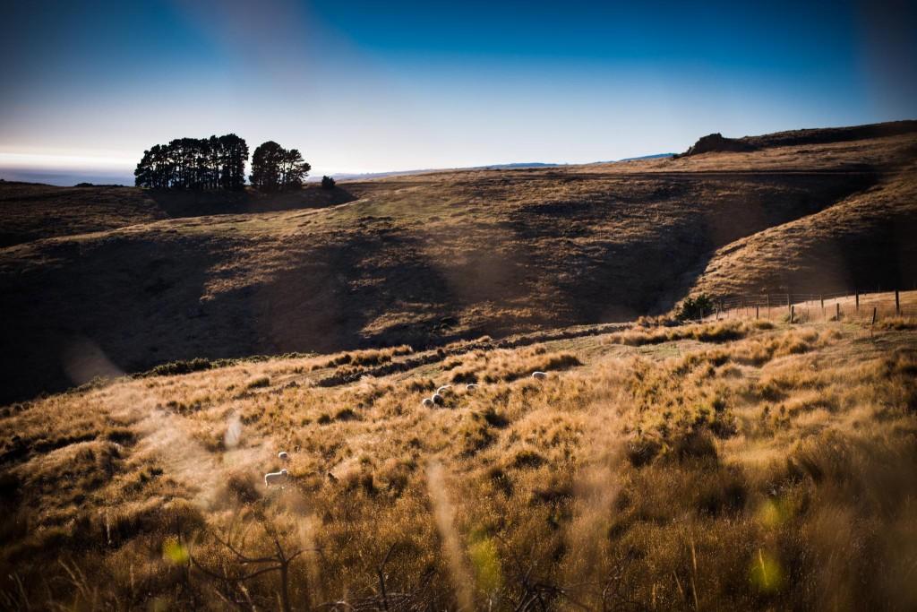 New Zealand-Christchurch-Sarah Galvan Photographe-8-Sarah Galvan Photographe-Sarah Galvan Photographe