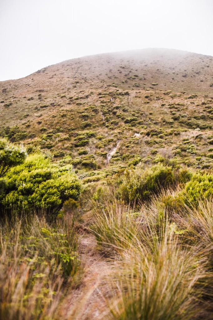 New Zealand-Collingwood-Sarah Galvan Photographe-5-4