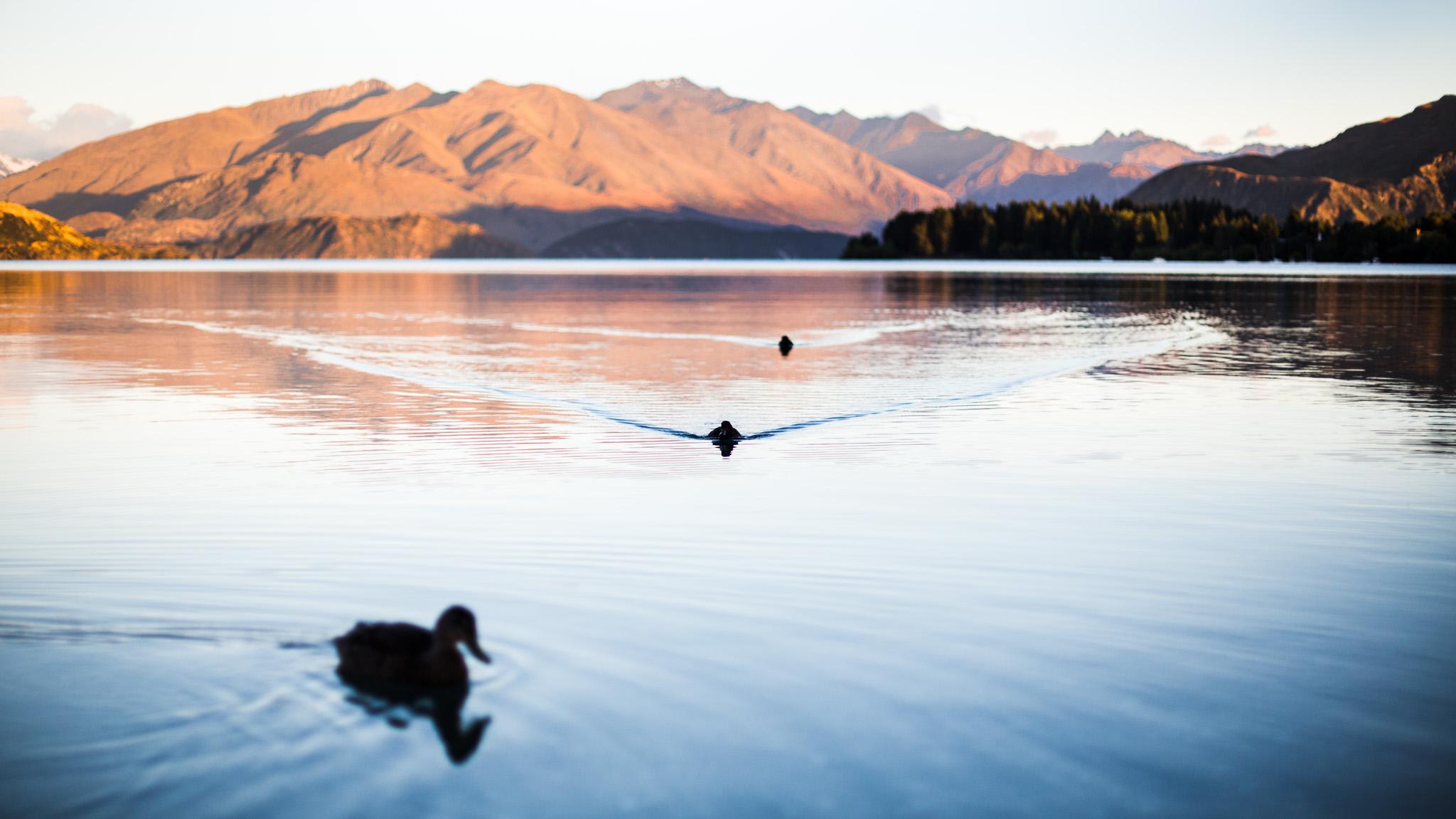 Un rêve-New Zealand-wanaka-Sarah Galvan Photographe