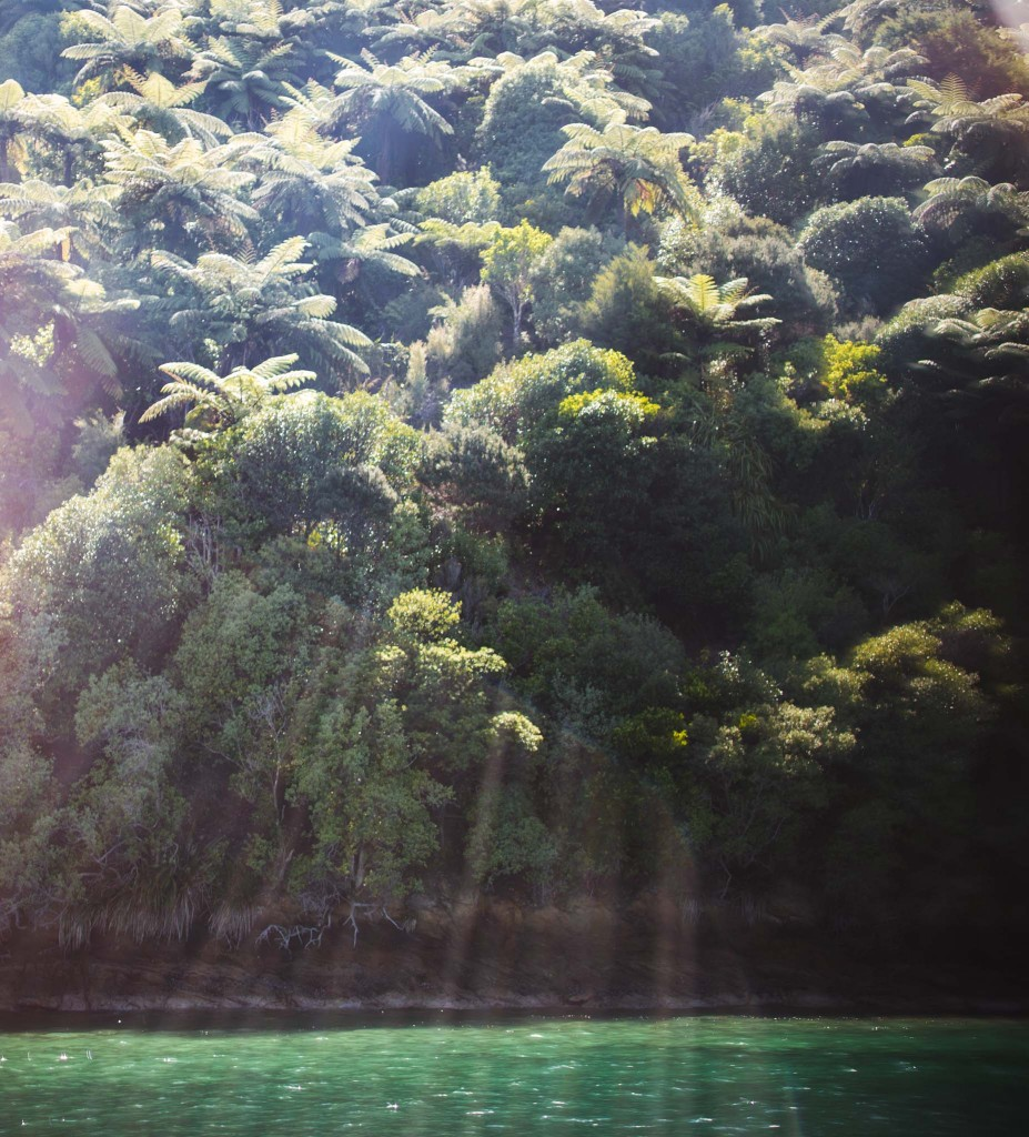 Marlborough Sounds- Belle lumière-New Zealand-Sarah Galvan Photographe